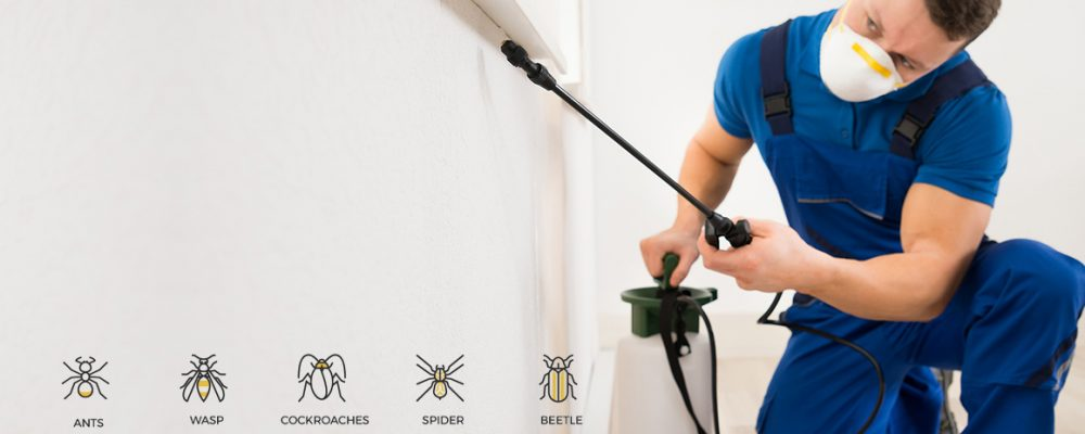 Tips to Get the Best Pest Control Services